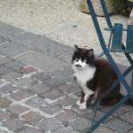 Venasque Cat